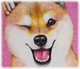 Shiba inu et douceur japonaises- regard humanisé